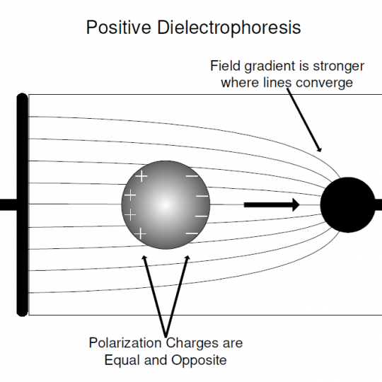 dielectrophoresis thesis